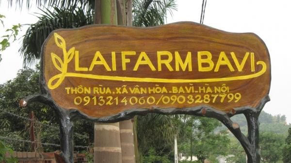 lai-farm